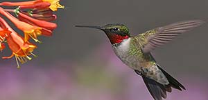 Hummingbird: how counselling helps